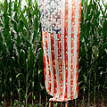 American Flag and a Field of Corn Print by Kim Fearheiley