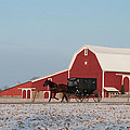 Amish Buggy and Red Barn Print by David Arment