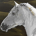 Andalusian foal Print by Janina  Suuronen
