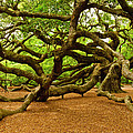 Angel Oak Tree Branches Print by Louis Dallara
