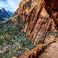 Angels Landing Trail from High Above Zion Canyon Floor Print by Gary Whitton