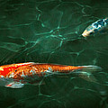 Animal - Fish - Koi - Another fish story Print by Mike Savad