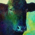 animals - cows- Black Cow Poster by Ann Powell