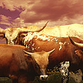 animals - cows- Longhorns La Familia  Poster by Ann Powell
