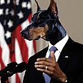 Anthropomorphic President Barack Obama with a doberman dog head in a digital art collage Poster by Marian Voicu