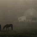 Antique Scene of Horses in a Fog Print by Mick Anderson