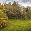Apple Orchard Poster by Amanda And Christopher Elwell