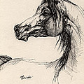 arabian horse drawing 26 Poster by Angel  Tarantella