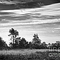 Ashdown Forest in Black and White Print by Natalie Kinnear