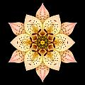 Asiatic Lily Flower Mandala Print by David J Bookbinder
