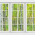 Aspen Tree Forest Autumn Time White Window View  Print by James BO  Insogna