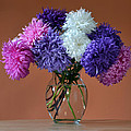 Astonishing Asters. Print by Terence Davis