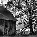 At the Barn in BW Print by Julie Dant