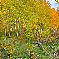 Autumn Color Print by Baywest Imaging