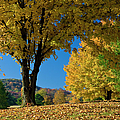 Autumn Colors Poster by Brian Jannsen