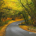 Autumn colours Print by Stephen Dowdell