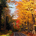 Autumn Country Road Poster by Joann Vitali