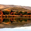 Autumn Glow on the Yakima River Poster by Carol Groenen