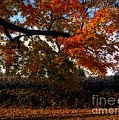 Autumn in the Country Print by Inspired Nature Photography By Shelley Myke