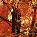 Autumn Leaves Print by Carol Groenen