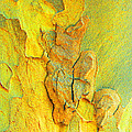 Autumn London Plane Tree Abstract 5 Print by Margaret Saheed