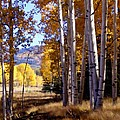 Autumn Paint Chama New Mexico Poster by Kurt Van Wagner