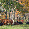 Autumn Pasture Poster by Donna Doherty