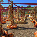 AUtumn Pumpkin Patch Print by Joann Vitali