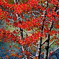Autumn Reflections Print by Janine Riley