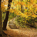 Autumn Stairs Print by Scott Norris