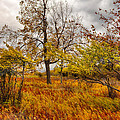 Autumn Storm at Dolly Sods West Virginia I Print by Dan Carmichael