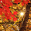 Autumn Sunrise Painterly Poster by Andee Design