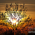 autumn tree in the sunset Print by Michal Boubin