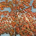 Autumn Tree Poster by Michael Anthony Edwards