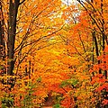 Autumn Tunnel of Trees Print by Terri Gostola