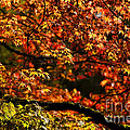 Autumn's Glory Print by Anne Gilbert