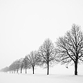 Avenue with row of trees in winter Poster by Matthias Hauser