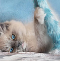 Baby Blues Poster by Lori Deiter