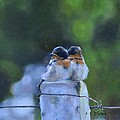 Baby Swallows on Post Poster by Donna Tuten
