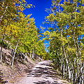 Back Country Road Take Me Home Colorado Print by James BO  Insogna