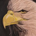 Bald Eagle Poster by Wil Golden