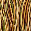 Bamboo Canes Print by Brenda Bryant