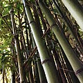 Bamboo Fence  Poster by John  Duplantis