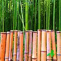 Bamboo Fence Poster by Julia Ivanovna Tanner