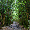 Bamboo Forest Trail Hana Maui Poster by Dustin K Ryan