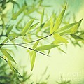 bamboo in the sun Print by Priska Wettstein
