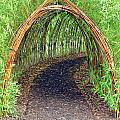 Bamboo Tunnel Print by Olivier Le Queinec