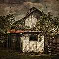 Barn In Morning Light Print by Kathy Jennings