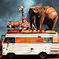 Barnum and Baileys Fabulous Road Trip Vacation Across The USA Circa 2013 5D22705 with text Print by Wingsdomain Art and Photography