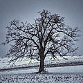barren winter scene with tree Print by Dan Friend